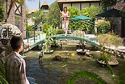 beautiful bridge at the Anaheim Majestic Garden Hotel